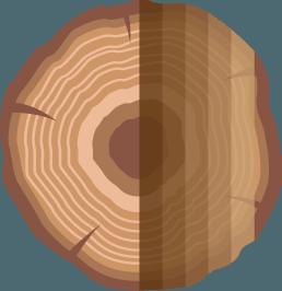 Boomstam-spiegel-PNG